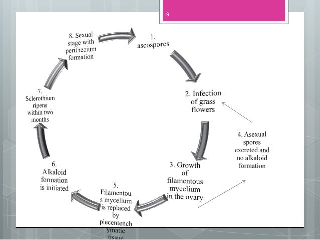 Life cycle of ergot pdf