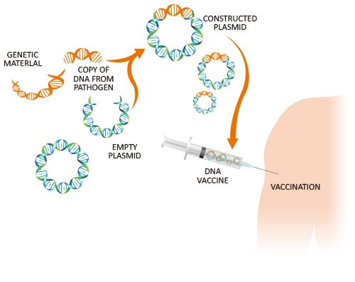 Recombinant dna applications in vaccines