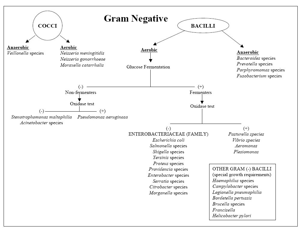 List of gram positive and gram negative bacteria pdf