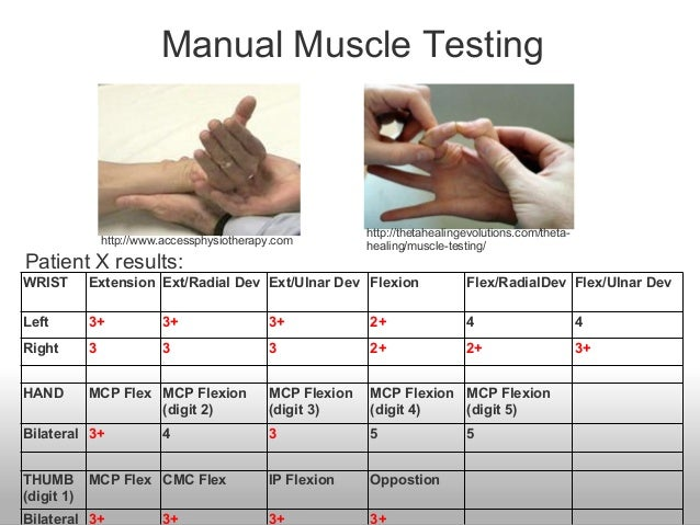 what is manual muscle testing