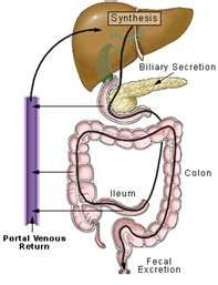 Colon cleanse coffee enema instructions