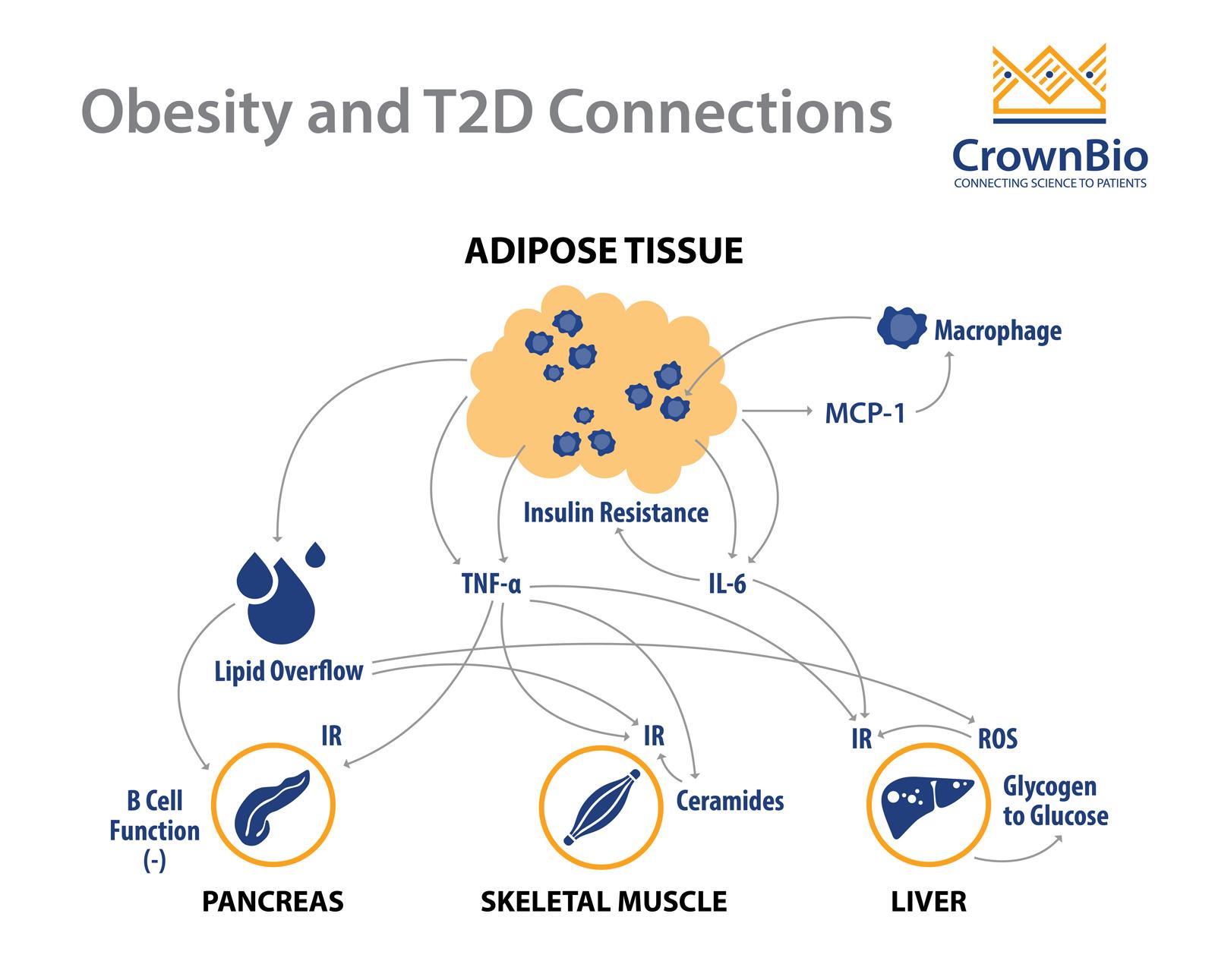 Link between obesity and type 2 diabetes pdf