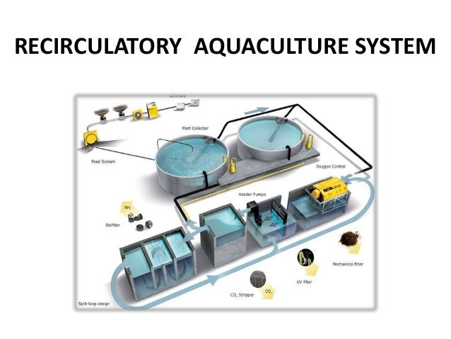 Flow-through water circulation systems of erthern fish ponds pdf