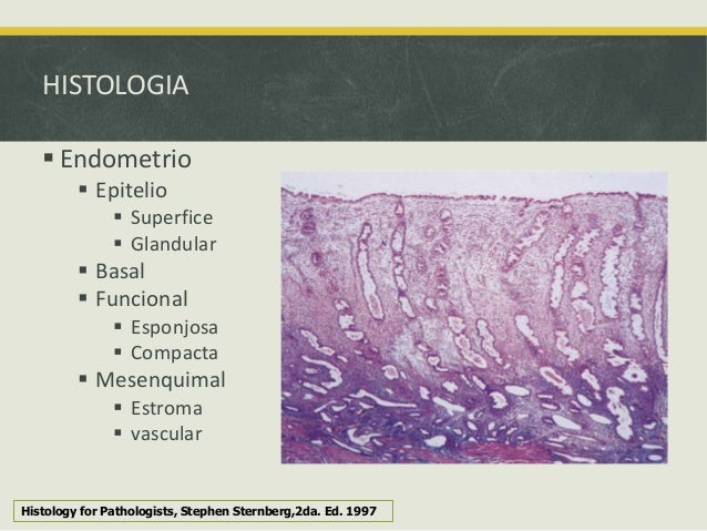 Histology for pathologists sternberg pdf