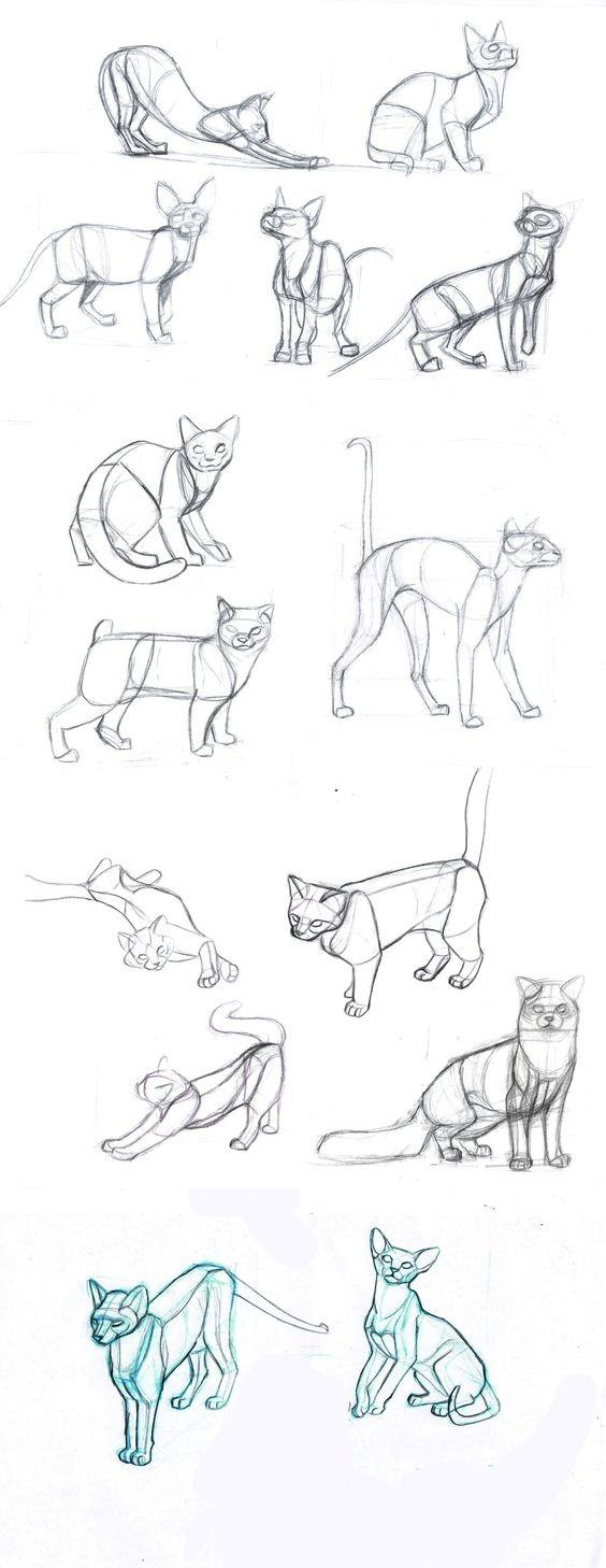 Me you how to draw a tiger