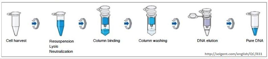 Qiagen rna extraction kit handbook